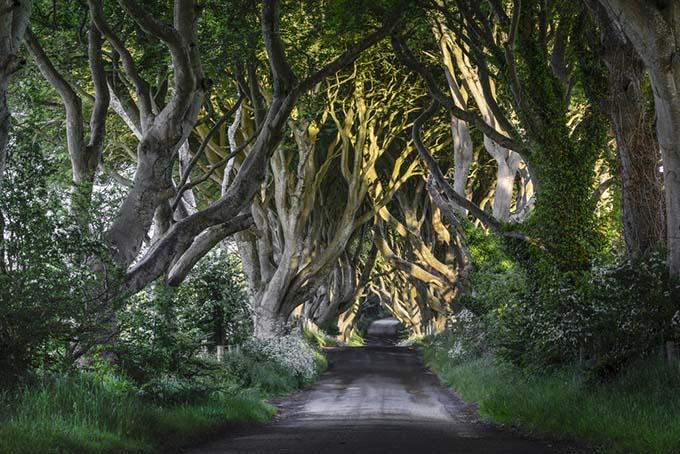 The Dark Hedges, Irlande du Nord