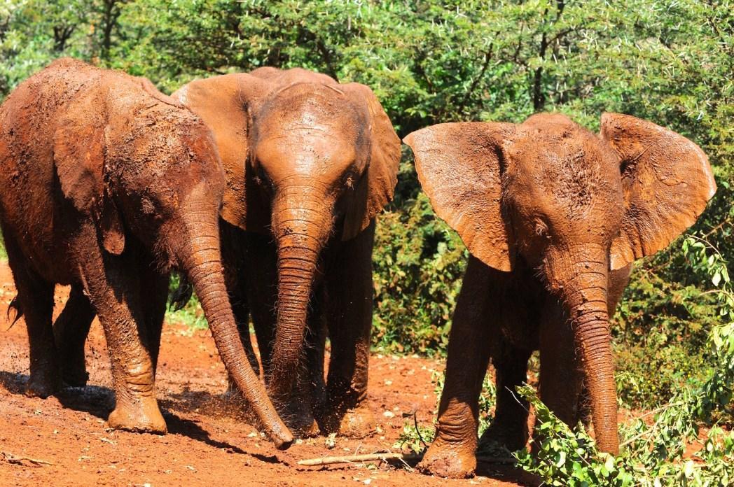David Sheldrick elephant orphanage