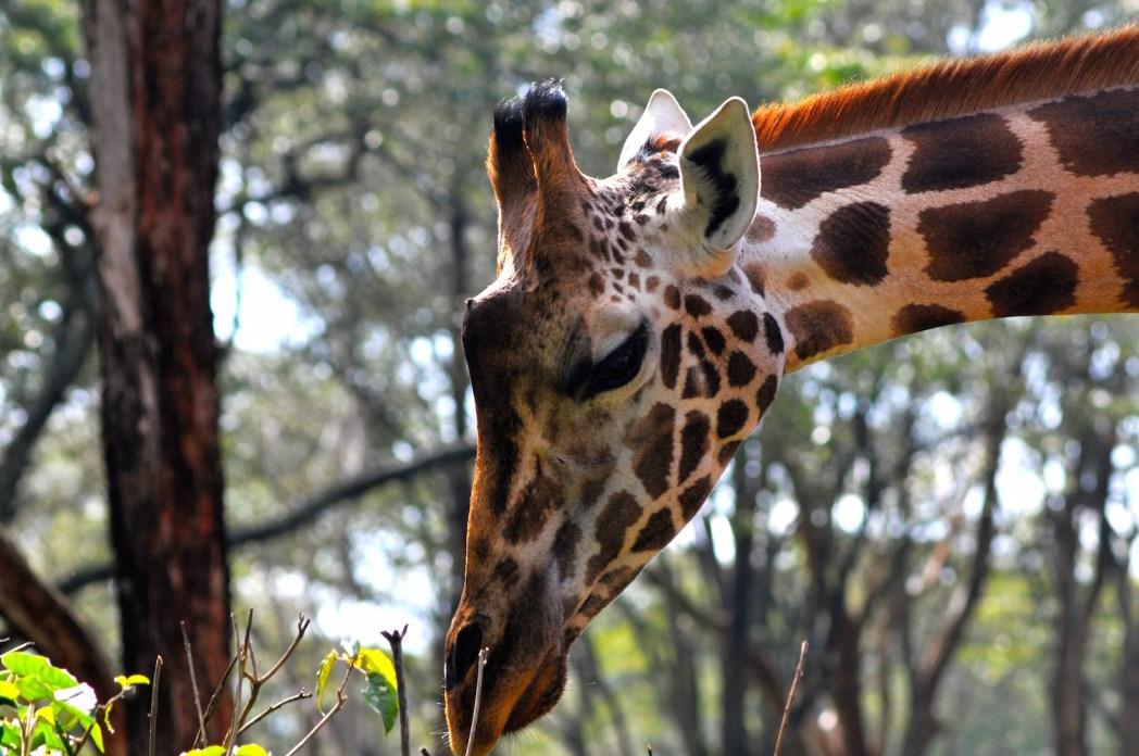 le Girafe Center
