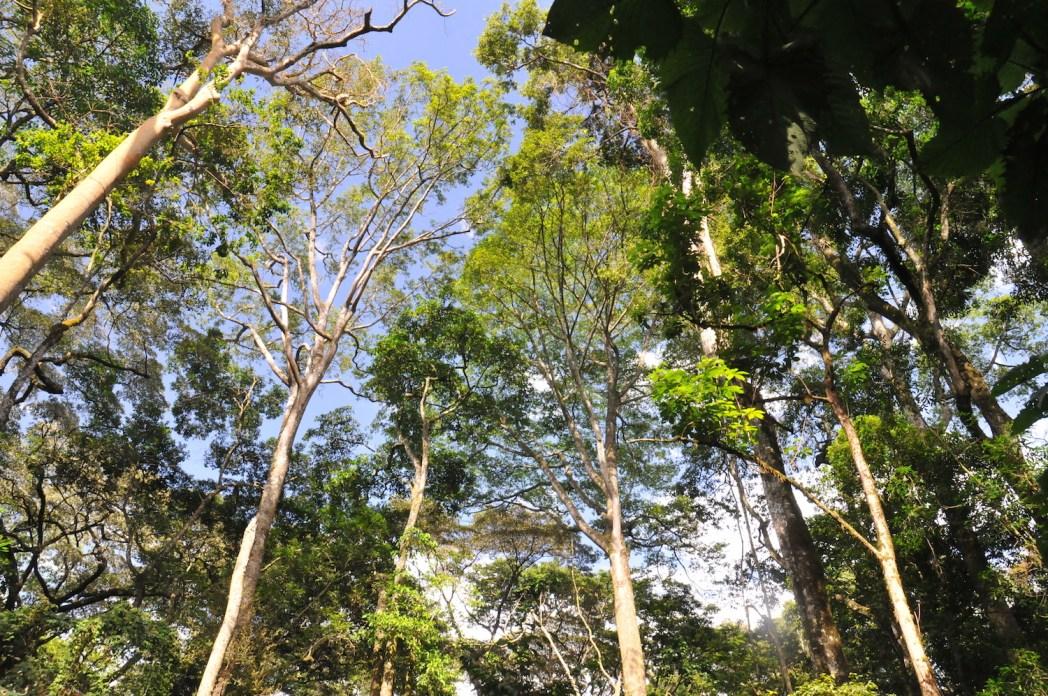 forêt de Kakamega